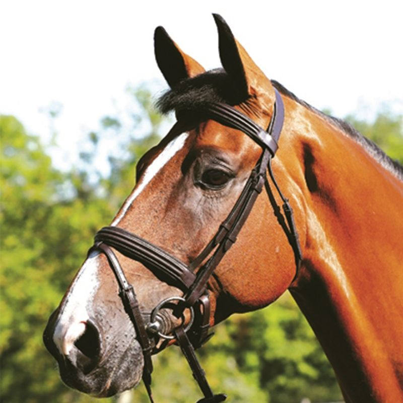 MARK TODD DOUBLE RAISED BRIDLE HAVANA