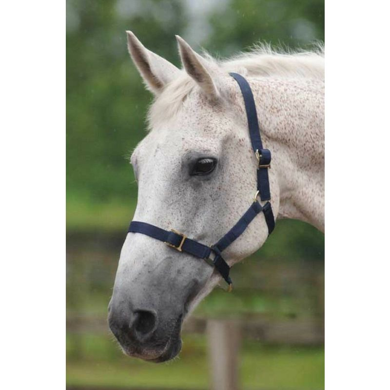 COTTAGE CRAFT HEADCOLLAR ECONOMY NAVY