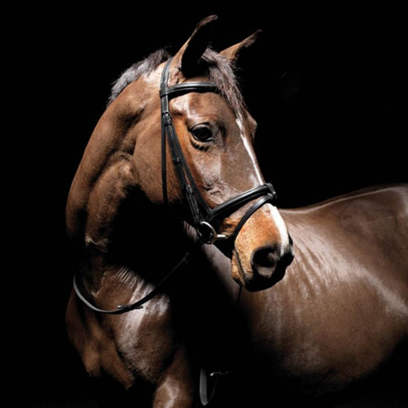 CALDENE BRIDLE FLASH PADDED/RAISED WITH REINS BLACK