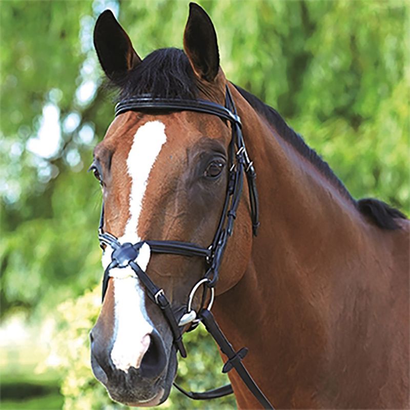 MARK TODD PADDED GRACKLE BRIDLE IN HAVANA