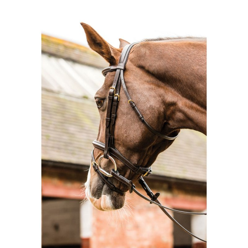 MARK TODD PERFORMANCE FLASH BRIDLE WITH BRASS FITTING IN HAVANA