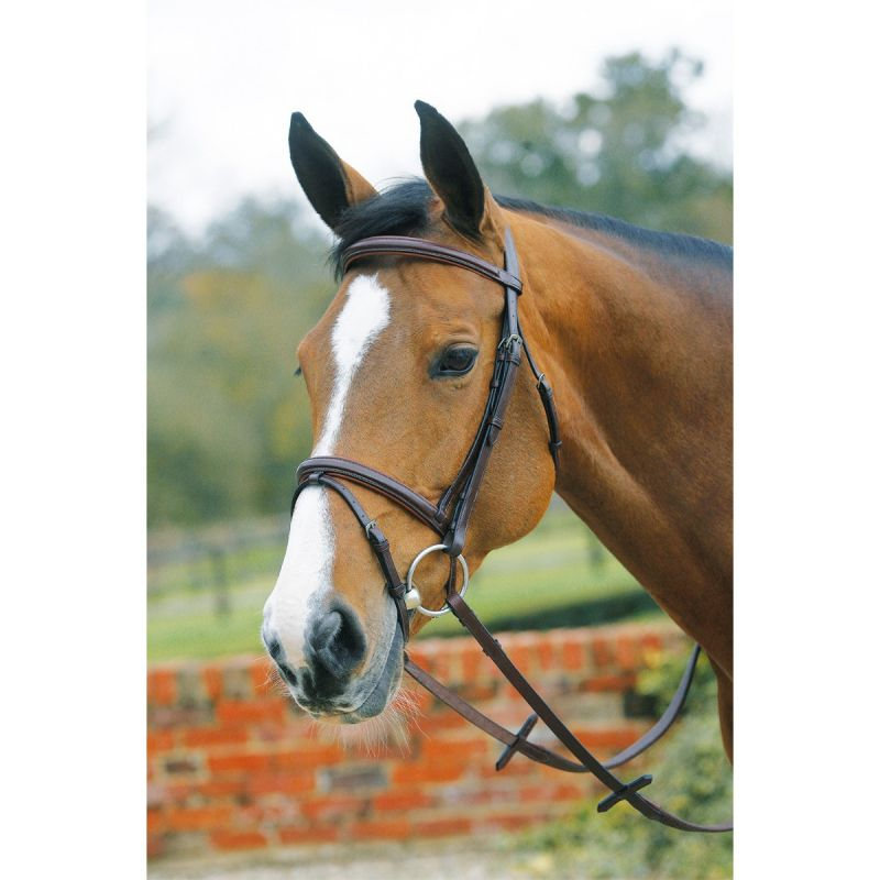 MARK TODD PADDED SQUARE RAISED BRIDLE WITH FLASH HAVANA